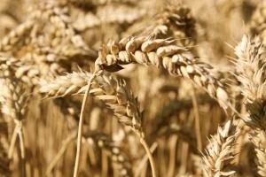 Fernstudium in der Agrarwissenschaft aufnehmen