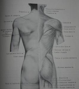 Medizin Fernstudium
